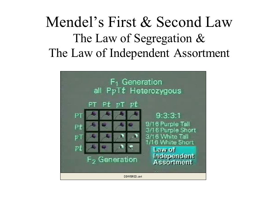 Mendel's First & Second Law The Law of Segregation & The Law of Independent Assortment