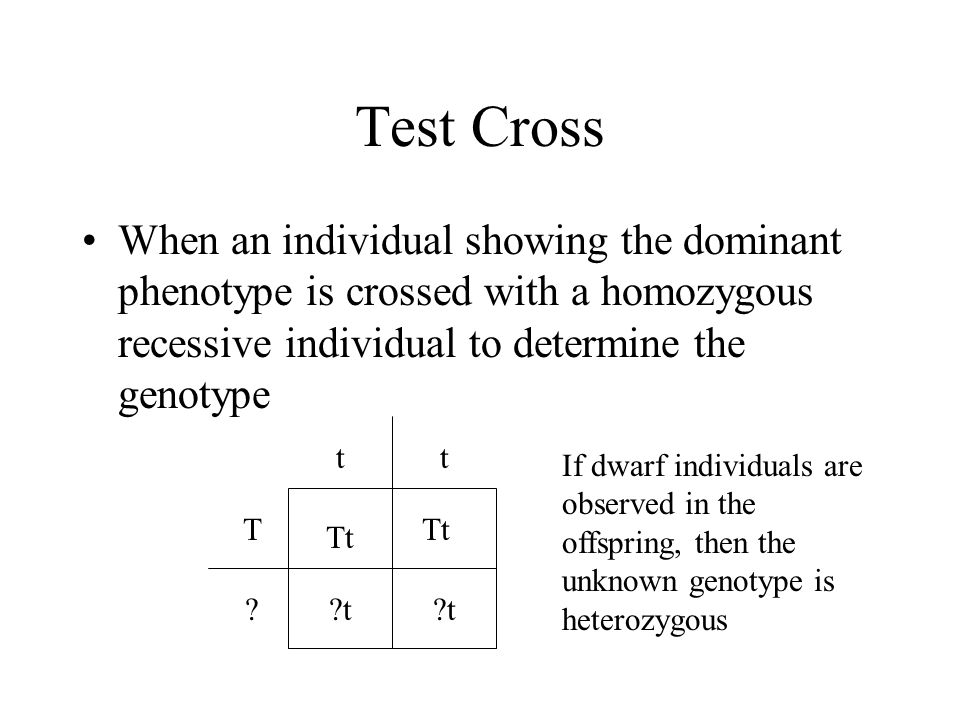 Test Cross When an individual showing the dominant phenotype is crossed with a homozygous recessive individual to determine the genotype t T t t Tt t Tt .