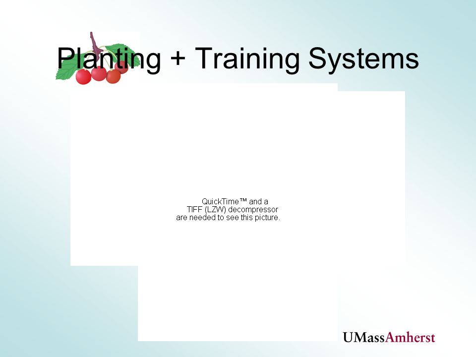 Planting + Training Systems
