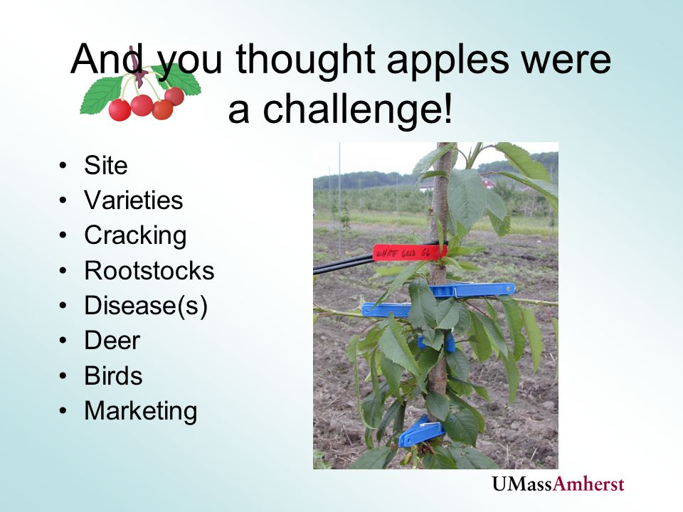 And you thought apples were a challenge.