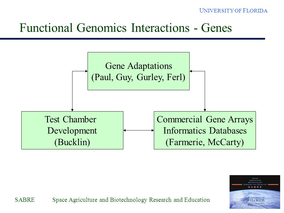 SABRE Space Agriculture and Biotechnology Research and Education U NIVERSITY OF F LORIDA Functional Genomics Interactions - Genes Gene Adaptations (Paul, Guy, Gurley, Ferl) Commercial Gene Arrays Informatics Databases (Farmerie, McCarty) Test Chamber Development (Bucklin)