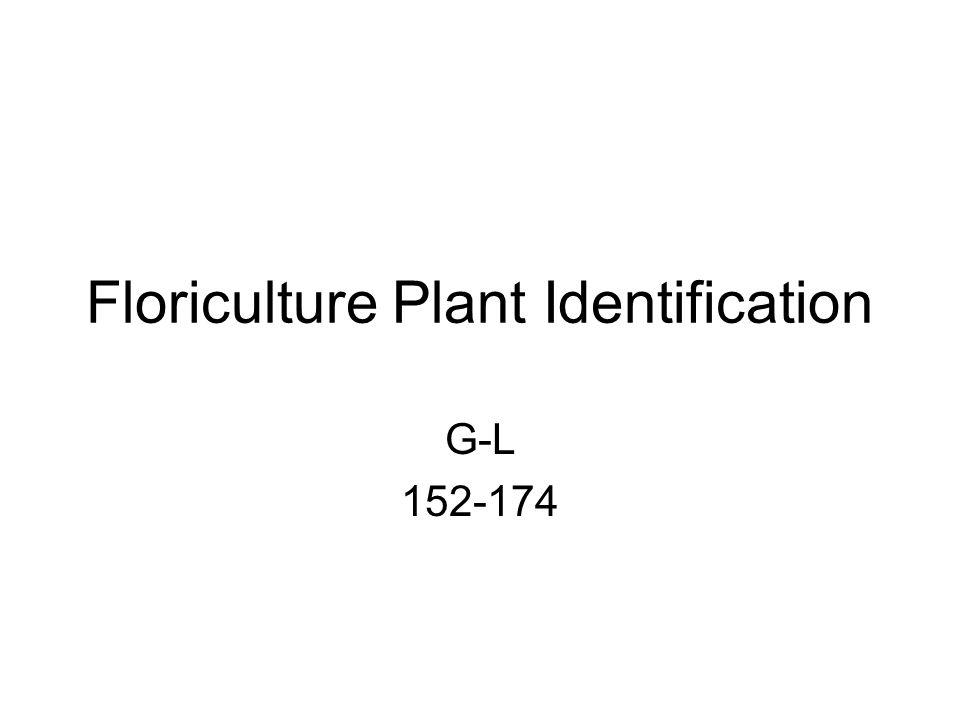 Floriculture Plant Identification G-L 152-174