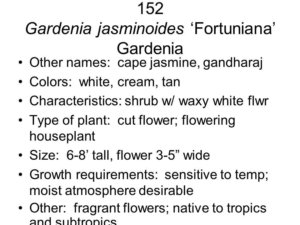 152 Gardenia jasminoides 'Fortuniana' Gardenia Other names: cape jasmine, gandharaj Colors: white, cream, tan Characteristics: shrub w/ waxy white flw