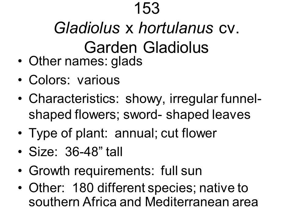 153 Gladiolus x hortulanus cv. Garden Gladiolus Other names: glads Colors: various Characteristics: showy, irregular funnel- shaped flowers; sword- sh