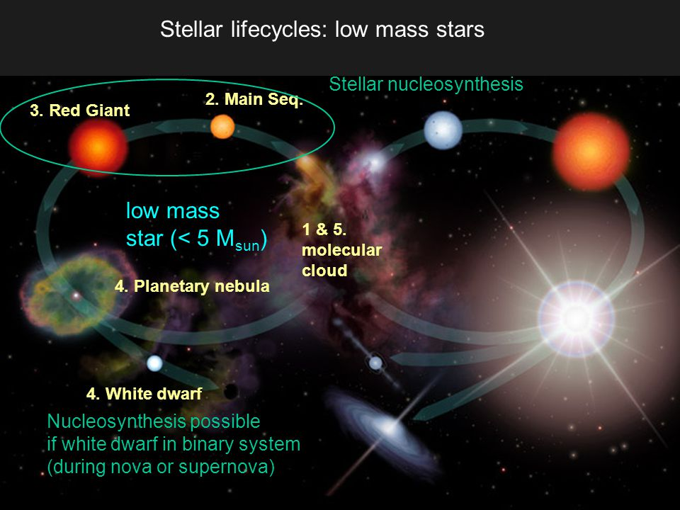 Stellar lifecycles: low mass stars 1 & 5. molecular cloud low mass star (< 5 M sun ) 3.