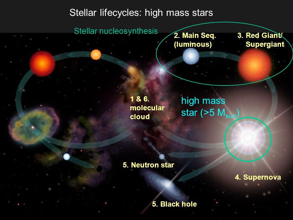 Stellar lifecycles: high mass stars 1 & 6. molecular cloud high mass star (>5 M sun ) 3.
