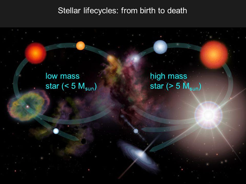 Stellar lifecycles: from birth to death low mass star (< 5 M sun ) high mass star (> 5 M sun )