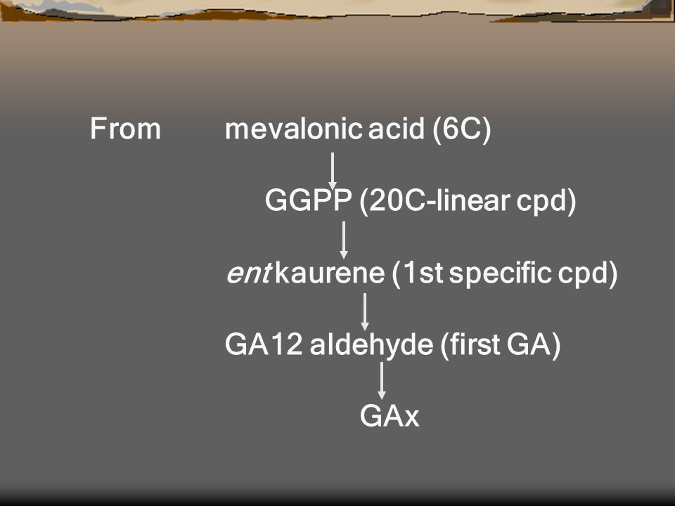 Frommevalonic acid (6C) GGPP (20C-linear cpd) ent kaurene (1st specific cpd) GA12 aldehyde (first GA) GAx