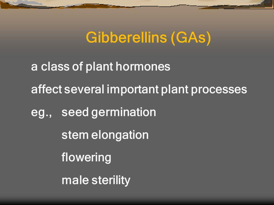 a class of plant hormones affect several important plant processes eg., seed germination stem elongation flowering male sterility Gibberellins (GAs)