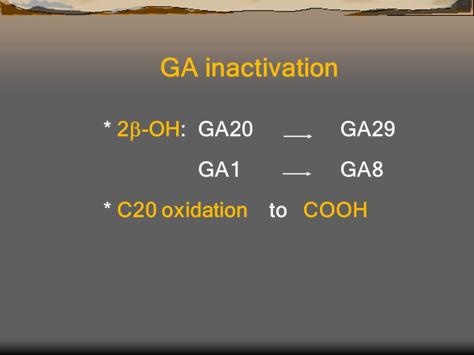 * 2  -OH:GA20GA29 GA1GA8 * C20 oxidation to COOH GA inactivation