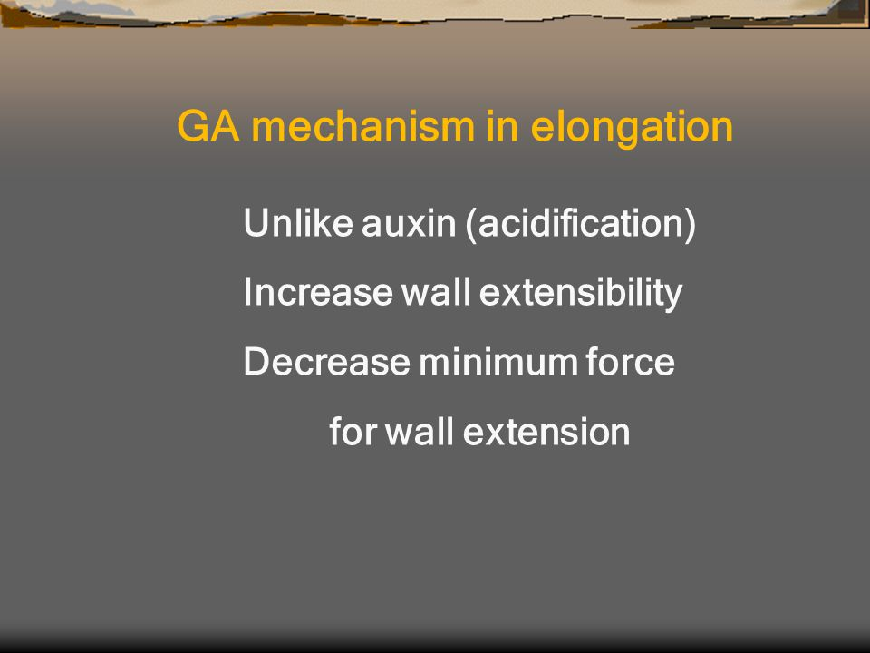 Unlike auxin (acidification) Increase wall extensibility Decrease minimum force for wall extension GA mechanism in elongation