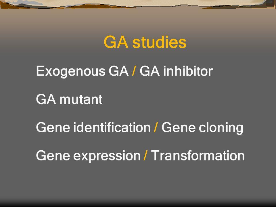 Exogenous GA / GA inhibitor GA mutant Gene identification / Gene cloning Gene expression / Transformation GA studies
