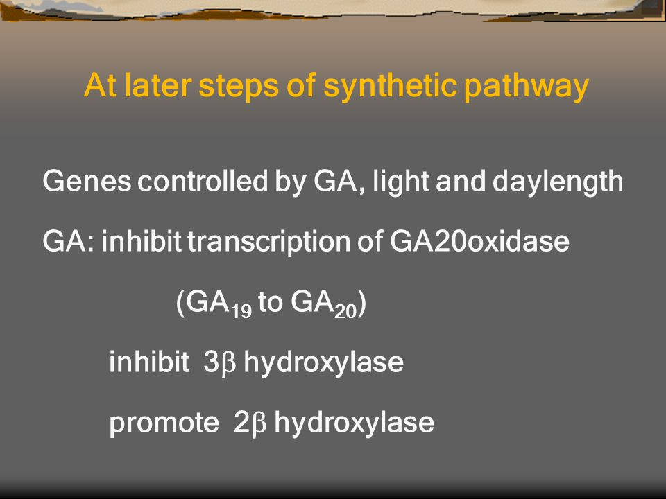 Genes controlled by GA, light and daylength GA: inhibit transcription of GA20oxidase (GA 19 to GA 20 ) inhibit 3  hydroxylase promote 2  hydroxylase At later steps of synthetic pathway