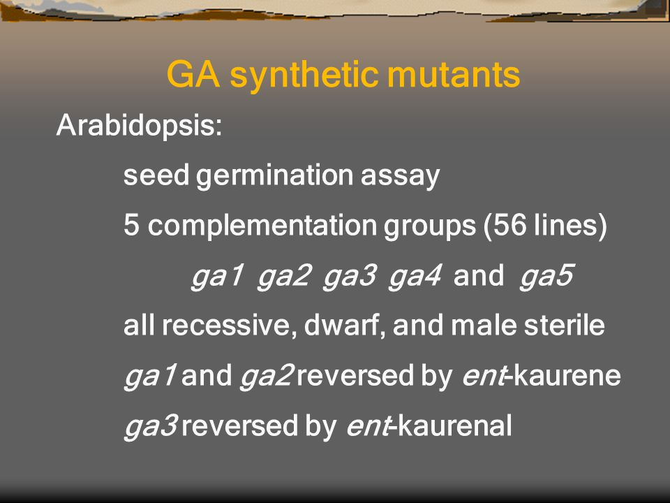 Arabidopsis: seed germination assay 5 complementation groups (56 lines) ga1 ga2 ga3 ga4 and ga5 all recessive, dwarf, and male sterile ga1 and ga2 reversed by ent-kaurene ga3 reversed by ent-kaurenal GA synthetic mutants