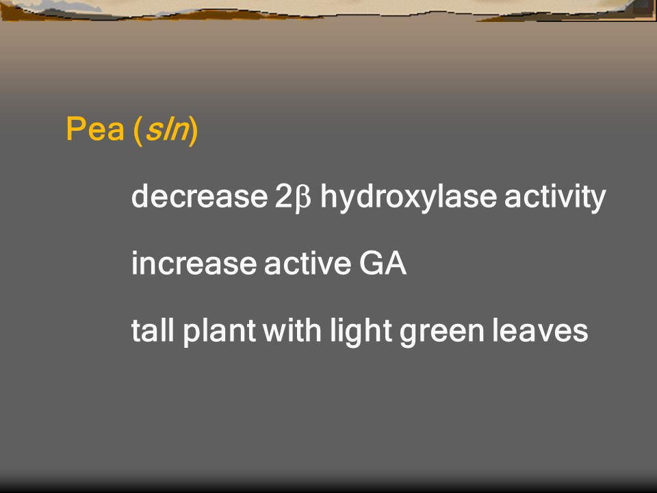 Pea (sln) decrease 2  hydroxylase activity increase active GA tall plant with light green leaves