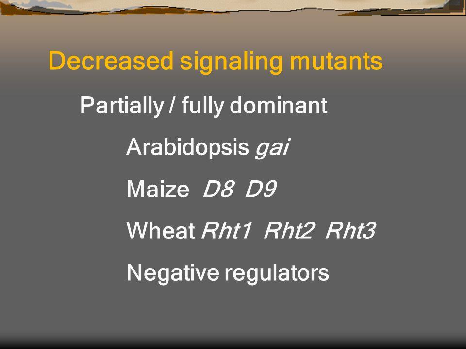 Partially / fully dominant Arabidopsis gai Maize D8 D9 Wheat Rht1 Rht2 Rht3 Negative regulators Decreased signaling mutants