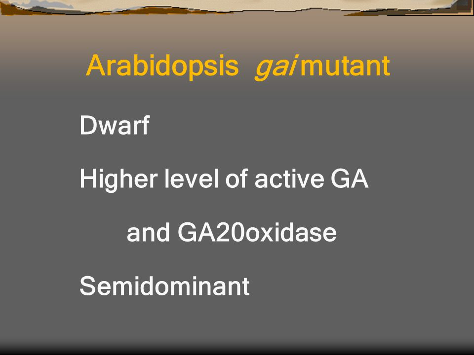 Dwarf Higher level of active GA and GA20oxidase Semidominant Arabidopsis gai mutant
