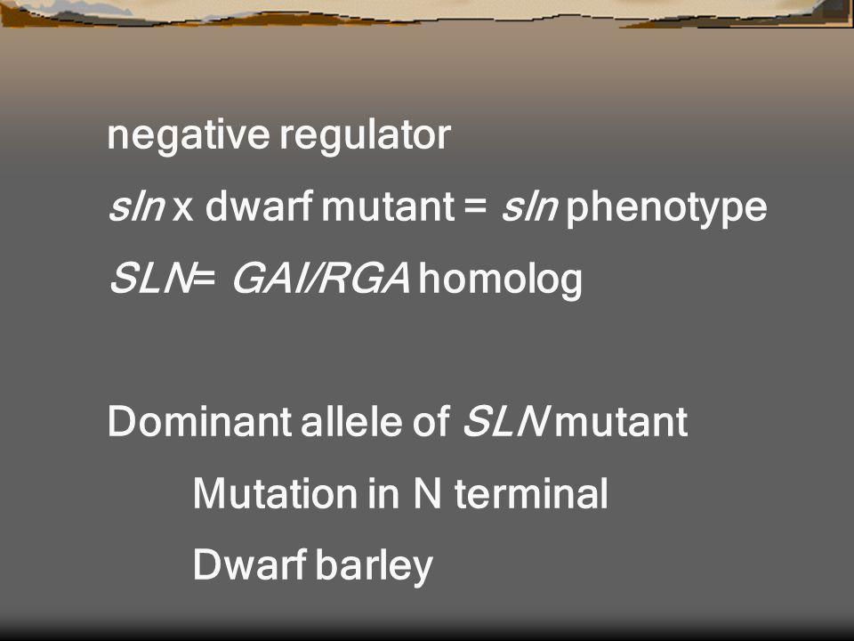 negative regulator sln x dwarf mutant = sln phenotype SLN= GAI/RGA homolog Dominant allele of SLN mutant Mutation in N terminal Dwarf barley