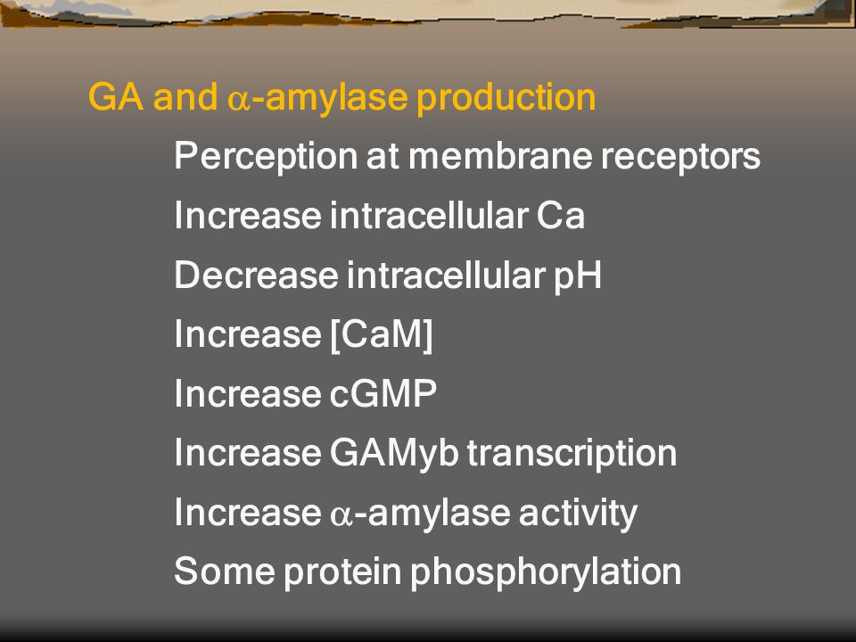GA and  -amylase production Perception at membrane receptors Increase intracellular Ca Decrease intracellular pH Increase [CaM] Increase cGMP Increase GAMyb transcription Increase  -amylase activity Some protein phosphorylation