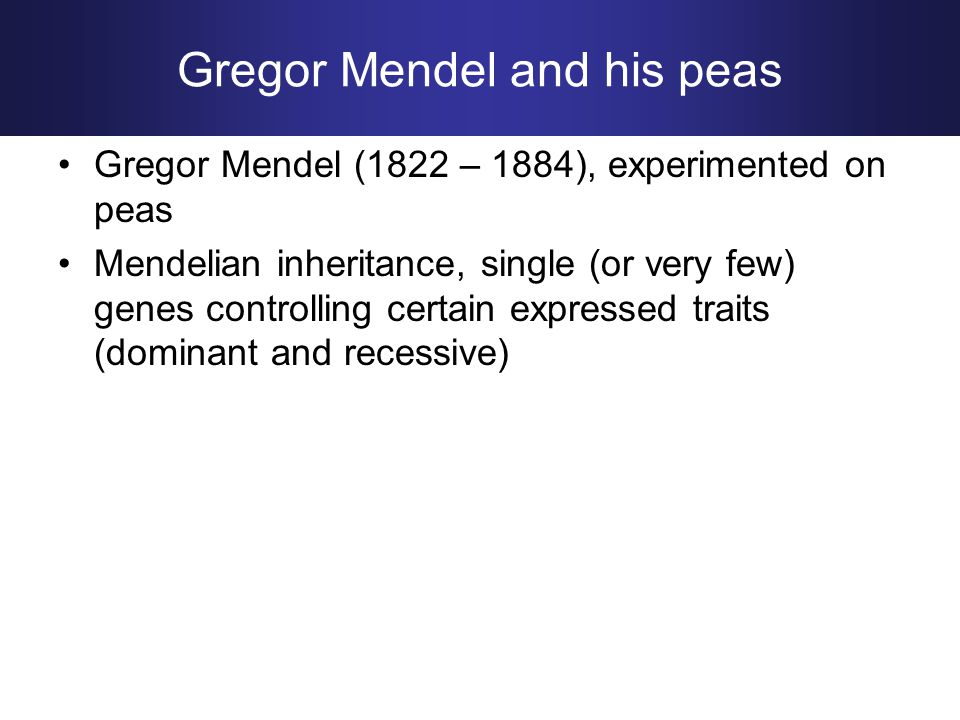 Gregor Mendel (1822 – 1884), experimented on peas Mendelian inheritance, single (or very few) genes controlling certain expressed traits (dominant and recessive) Gregor Mendel and his peas