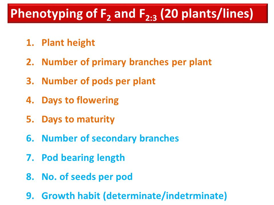 Phenotyping of F 2 and F 2:3 (20 plants/lines) 1.Plant height 2.Number of primary branches per plant 3.Number of pods per plant 4.Days to flowering 5.
