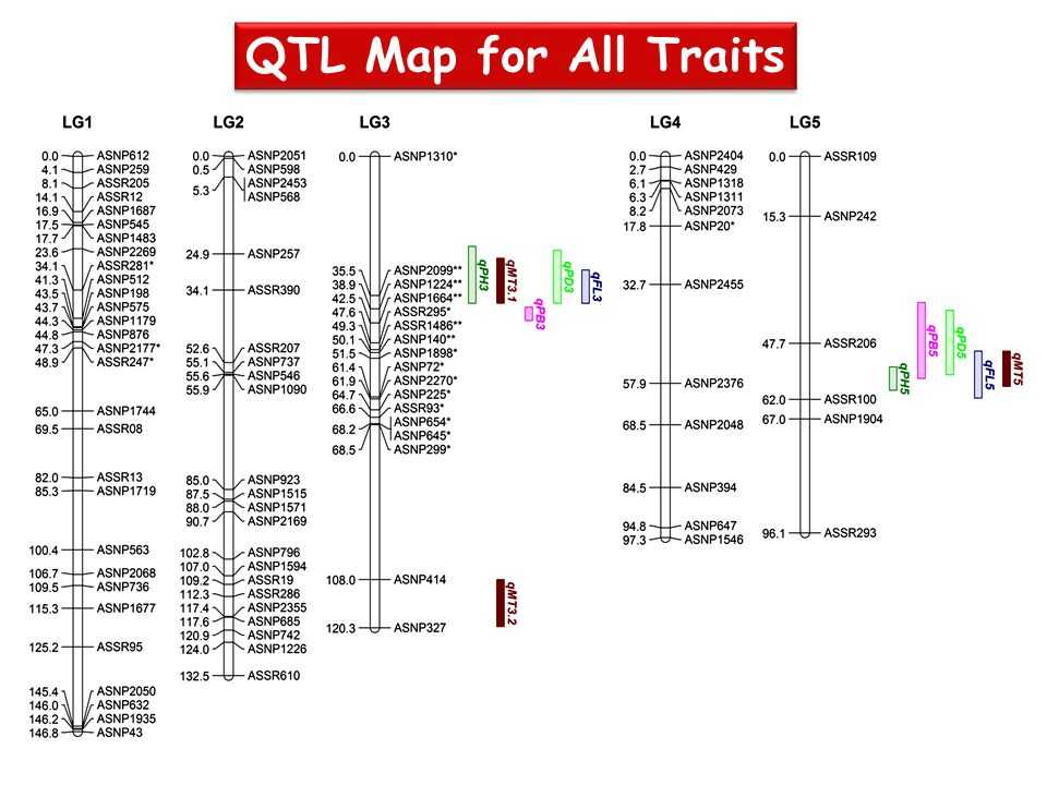 QTL Map for All Traits