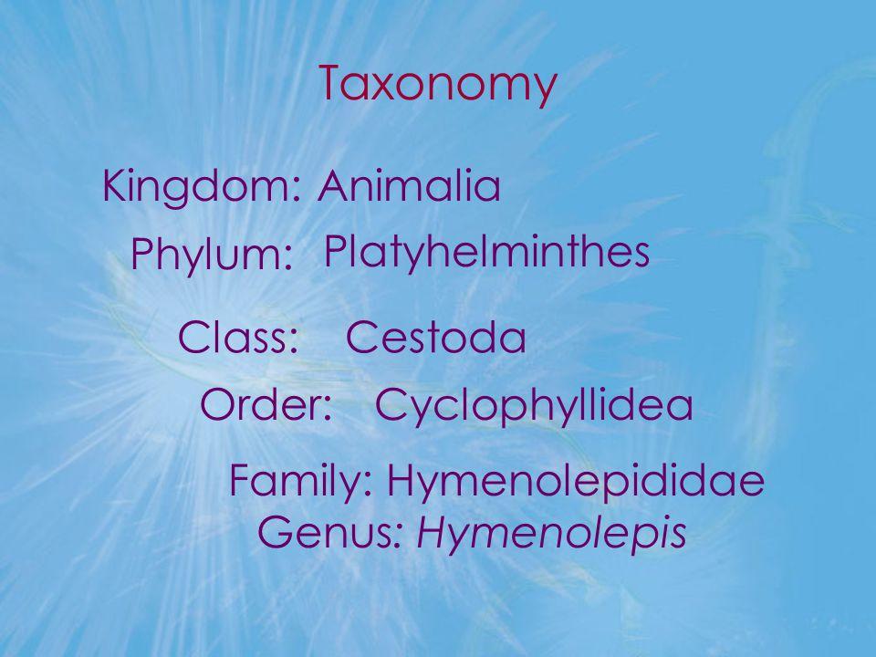 Taxonomy Kingdom: Animalia Family: Hymenolepididae Genus: Hymenolepis Phylum: Platyhelminthes Class: Order: Cestoda Cyclophyllidea