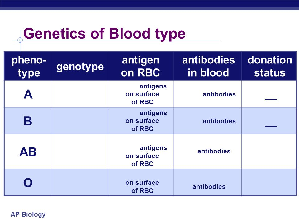 AP Biology Co-dominance  2 alleles affect the phenotype equally & separately  not blended phenotype  human ABO blood groups  3 alleles  I A, I B, i  I A & I B alleles are co-dominant  glycoprotein antigens on RBC  I A I B = both antigens are produced  i allele recessive to both