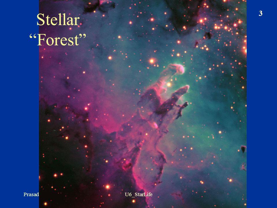 Stellar Forest Prasad 3 U6_StarLife
