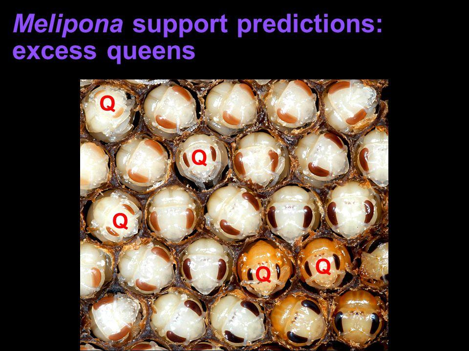 Melipona support predictions: excess queens Q Q Q Q Q