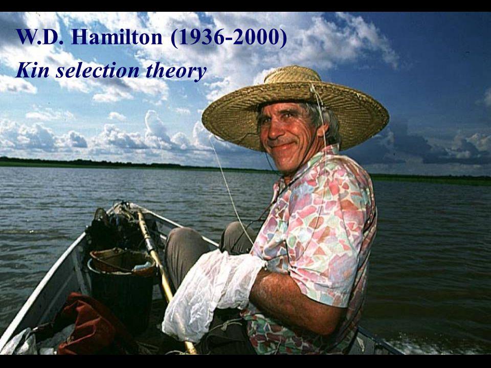 W.D. Hamilton (1936-2000) Kin selection theory