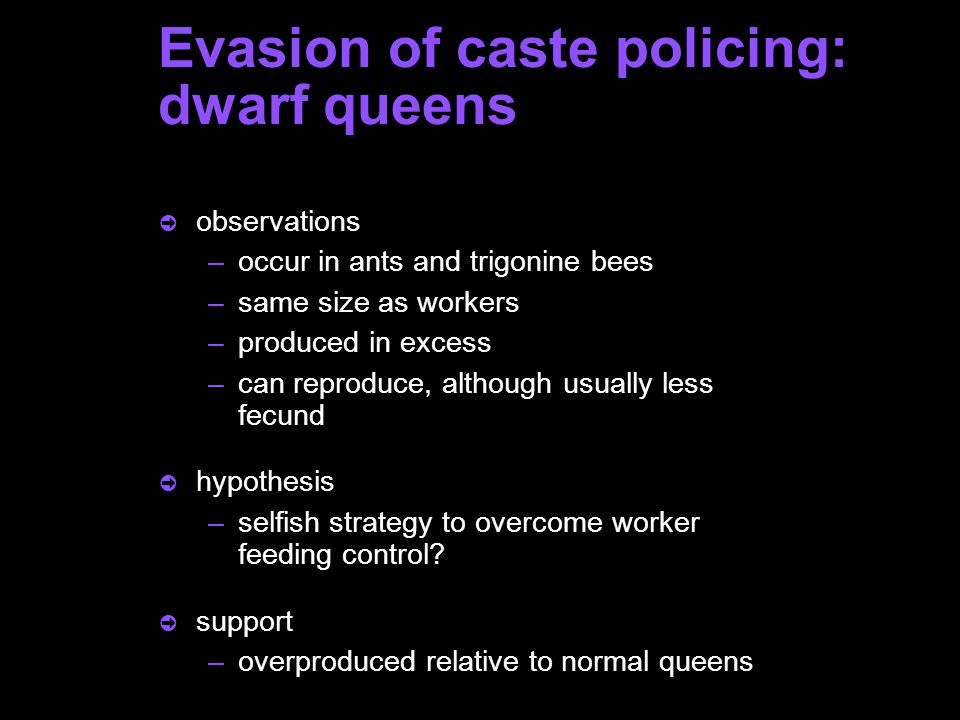 Evasion of caste policing: dwarf queens ò observations –occur in ants and trigonine bees –same size as workers –produced in excess –can reproduce, although usually less fecund ò hypothesis –selfish strategy to overcome worker feeding control.