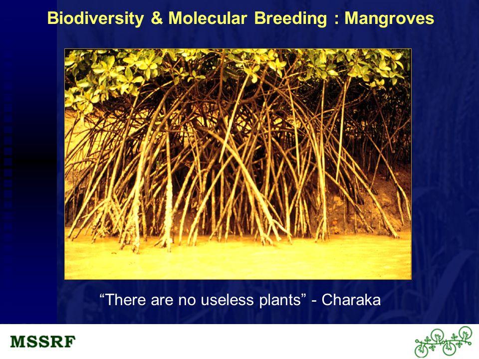 Biodiversity & Molecular Breeding : Mangroves There are no useless plants - Charaka