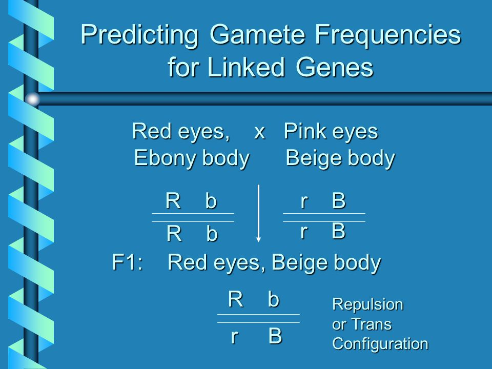 Predicting Gamete Frequencies for Linked Genes Red eyes, x Pink eyes Ebony body Beige body Red eyes, x Pink eyes Ebony body Beige body R b r B F1: Red