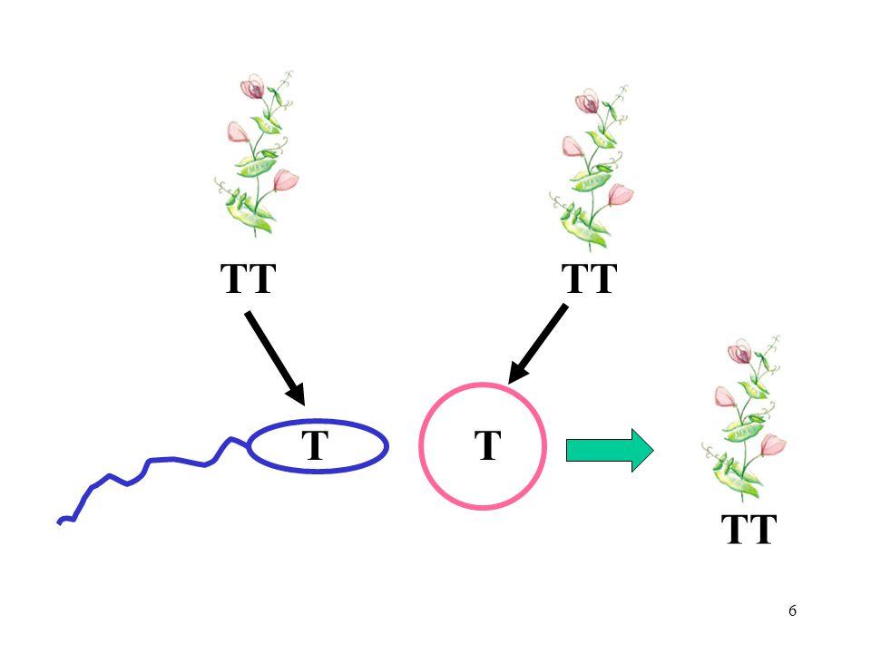 17 Homozygous Both alleles alike AA or aa