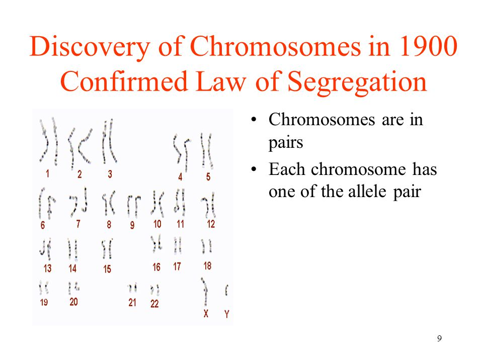 50 Hemophilia Blood clotting impaired Recessive allele, h carried on X cms X-linked recessive trait More common in males