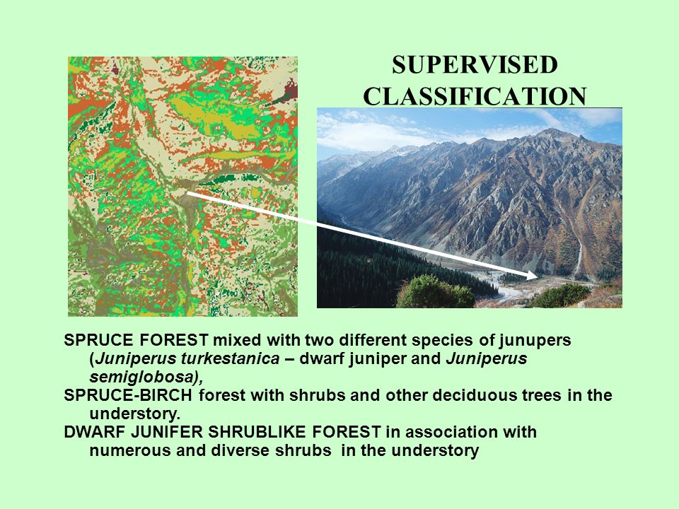 SUPERVISED CLASSIFICATION SPRUCE FOREST mixed with two different species of junupers (Juniperus turkestanica – dwarf juniper and Juniperus semiglobosa), SPRUCE-BIRCH forest with shrubs and other deciduous trees in the understory.