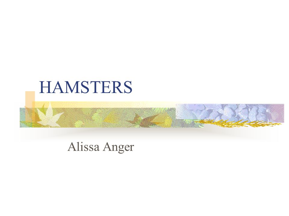 HAMSTERS Alissa Anger