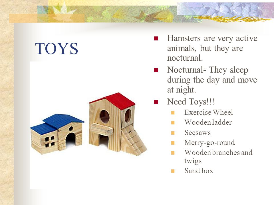 TOYS Hamsters are very active animals, but they are nocturnal.