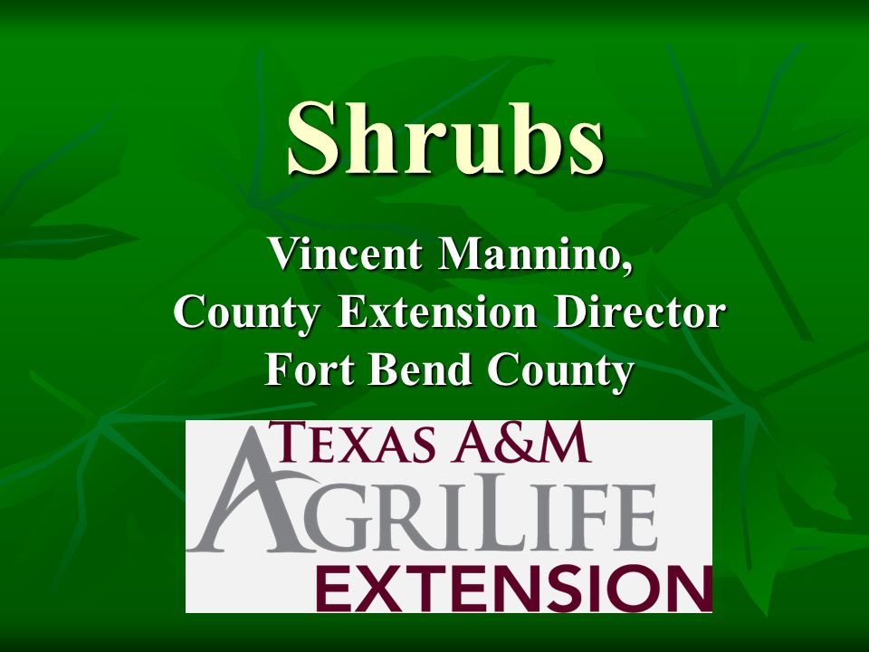 Shrubs Vincent Mannino, County Extension Director Fort Bend County