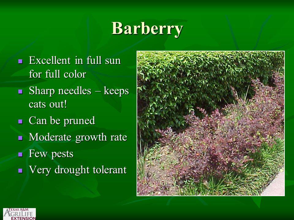 Euonymus Evergreen Evergreen 4 inches as a vine to 20 feet as a tree 4 inches as a vine to 20 feet as a tree Partial shade to full sun Partial shade to full sun Moist soil Moist soil pH 3-7 -7.0 pH 3-7 -7.0 Scale and whitefly a problem Scale and whitefly a problem