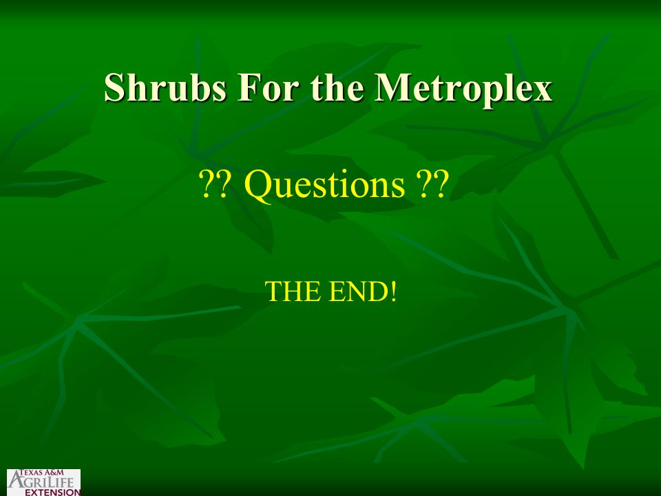 Shrubs For the Metroplex ?? Questions ?? THE END!