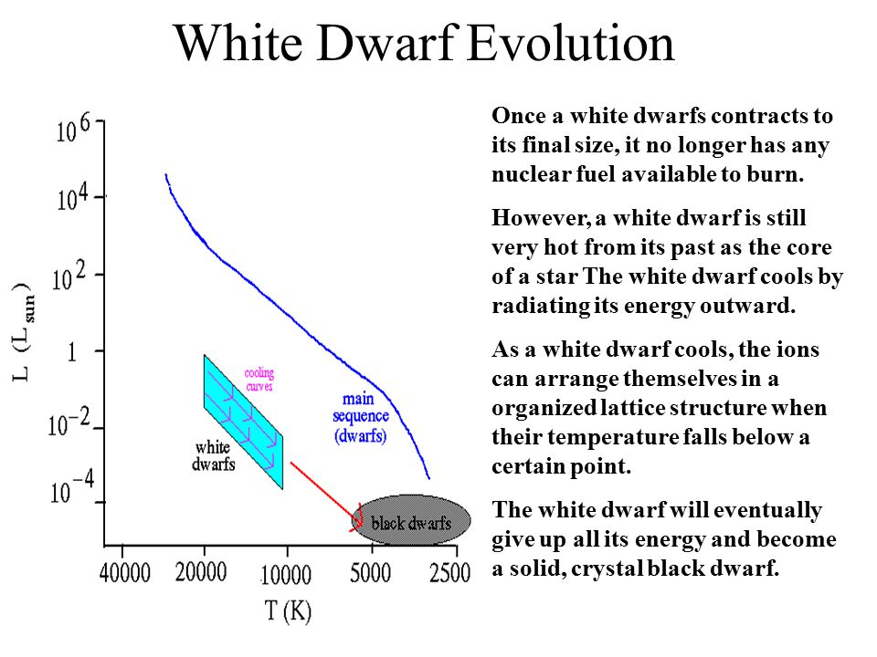 White Dwarfs White dwarf stars are much smaller than normal stars, such that a white dwarf of the mass of the Sun is only slightly larger than the Ear
