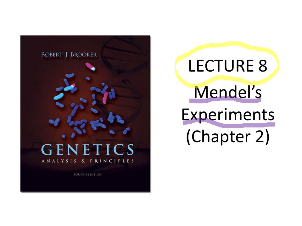 LECTURE 8 Mendel's Experiments (Chapter 2)