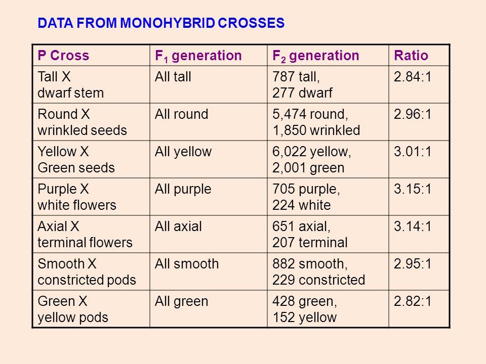 P CrossF 1 generationF 2 generationRatio Tall X dwarf stem All tall787 tall, 277 dwarf 2.84:1 Round X wrinkled seeds All round5,474 round, 1,850 wrink