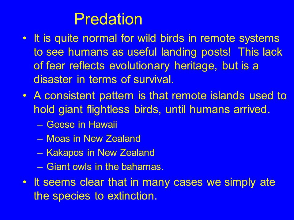 Predation It is quite normal for wild birds in remote systems to see humans as useful landing posts! This lack of fear reflects evolutionary heritage,