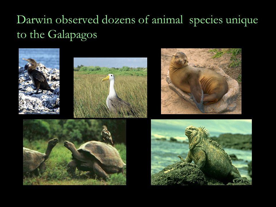 Darwin observed dozens of animal species unique to the Galapagos