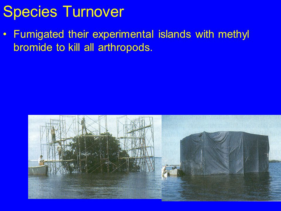 Species Turnover Fumigated their experimental islands with methyl bromide to kill all arthropods.
