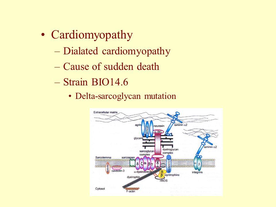 Cardiomyopathy –Dialated cardiomyopathy –Cause of sudden death –Strain BIO14.6 Delta-sarcoglycan mutation