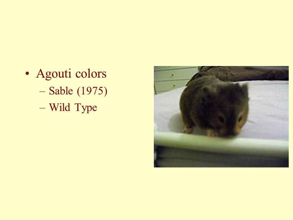 Agouti colors –Sable (1975) –Wild Type